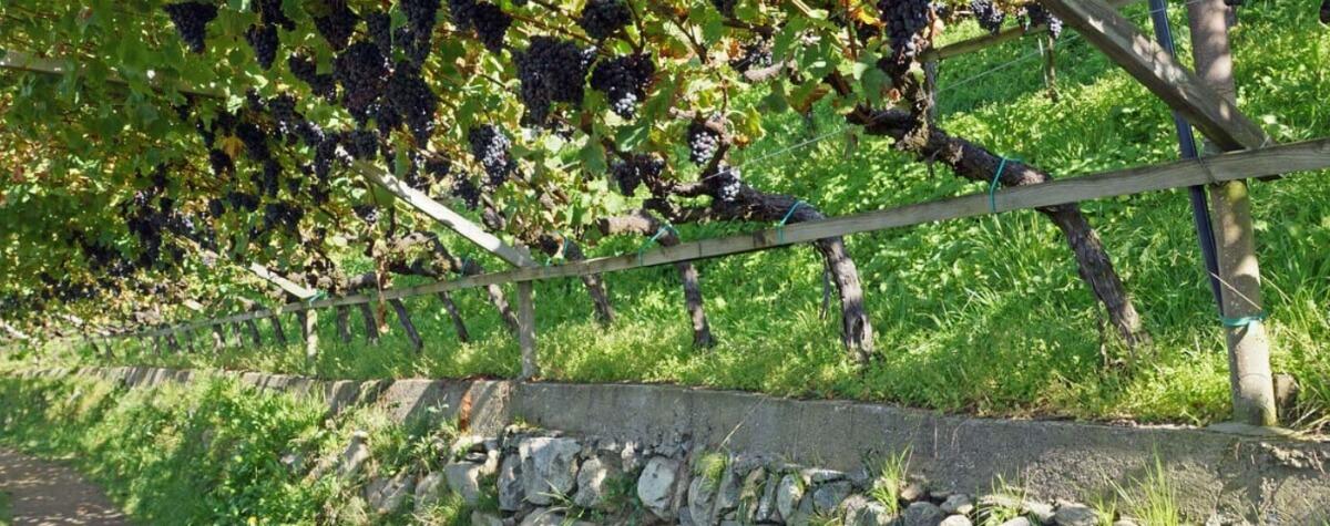 Waalwege - gemütliches Wandern auf malerischen Pfaden